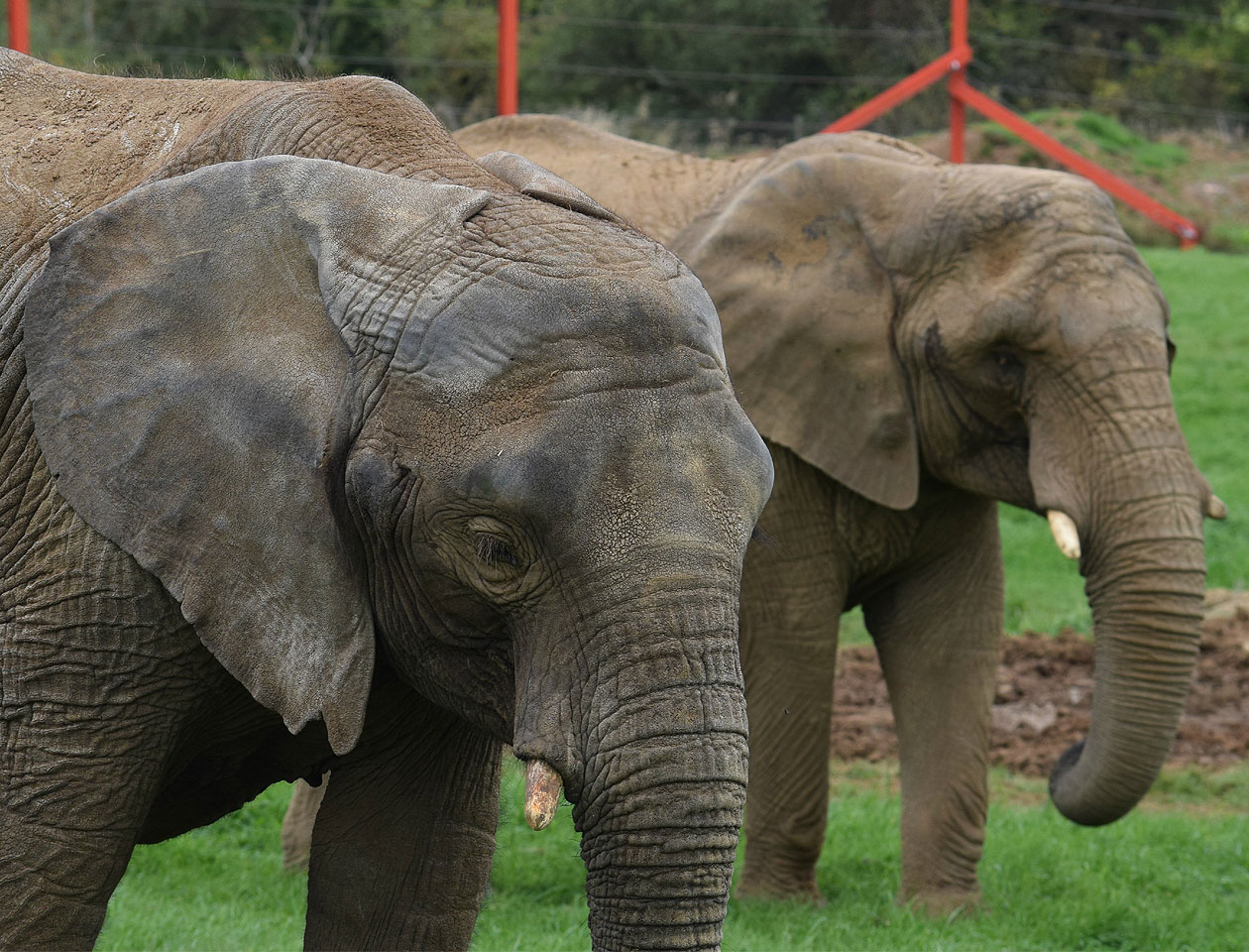 Hag Provide Elephant Proof Doors For Noah S Ark Zoo Farm